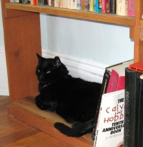 Spike on the Cat Warming Shelf