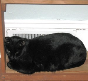 The Kitten on the Cat Warming Shelf