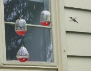 Hummingbird in July