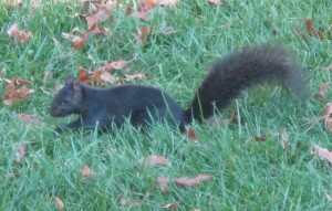 Black Squirrel, West Virginia State Capitol