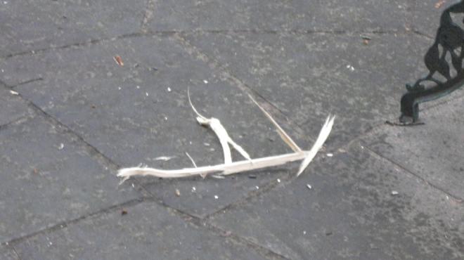 Spruce shrapnel on the patio