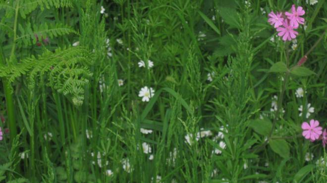 In a small meadow in Sherwood Forest
