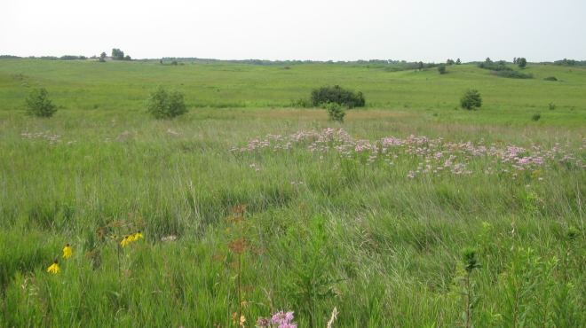 Nachusa Grasslands view
