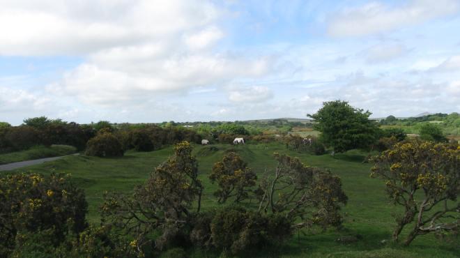 Bodmin Moor pastoral
